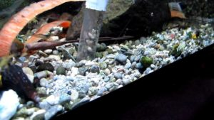 чистить грунт в аквариуме