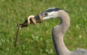 Чем и как вывести змей из дома