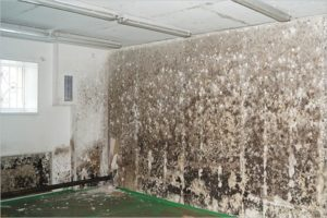 Что делать, если появилась плесень на стене в квартире