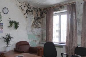 Как эффективно избавиться от плесени на стенах в частном доме