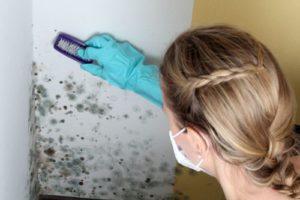 Как избавиться от запаха плесени в доме
