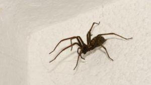 Как эффективно можно защитить дом от пауков